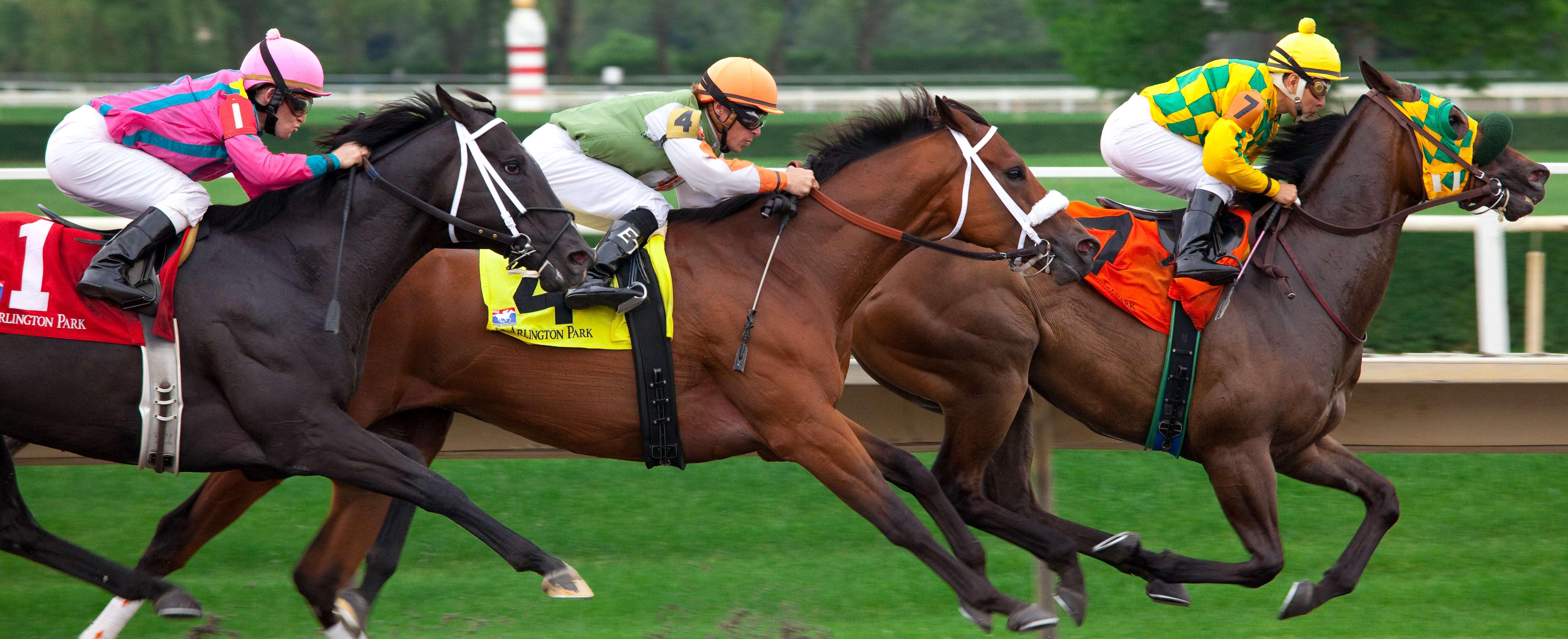 afbeelding paardenrennen
